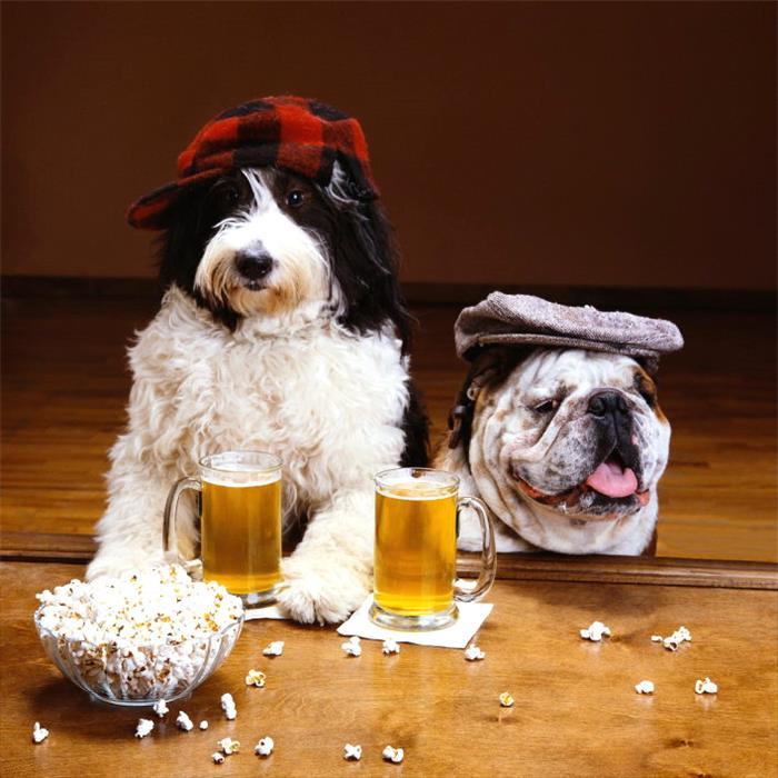 Картинка три собаки с бутылкой