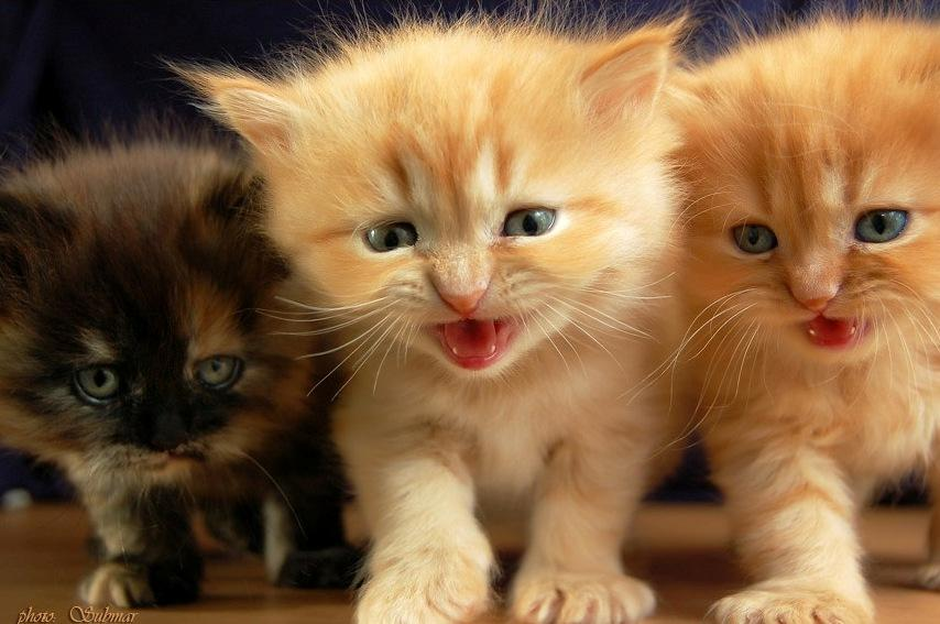 Картинки веселый котята с надписями