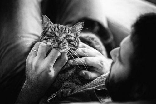 Мужчины и кошки (15 фото)