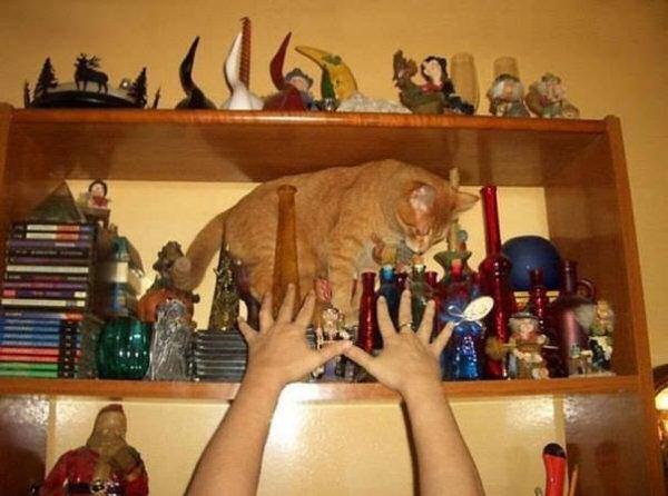 Юмор: Котики,которые пожалели о том,что сделали (10 фото)