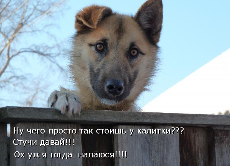 Картинки смешные собачки с надписями