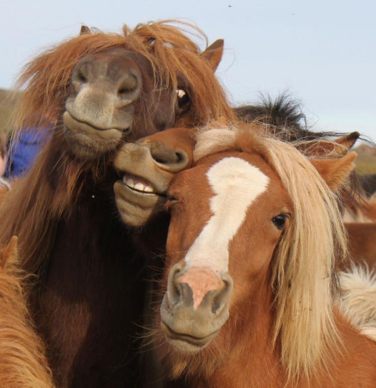 Картинки с лошадью прикольные