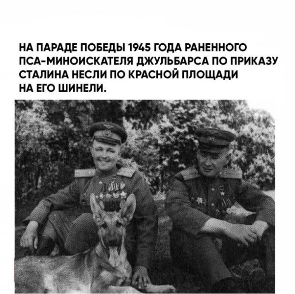 Чем знаменита собака, для которой Сталин отдал свою шинель? (6 фото)