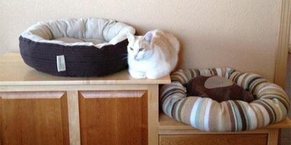 Юмор: Кошки и их логика (13 фото)