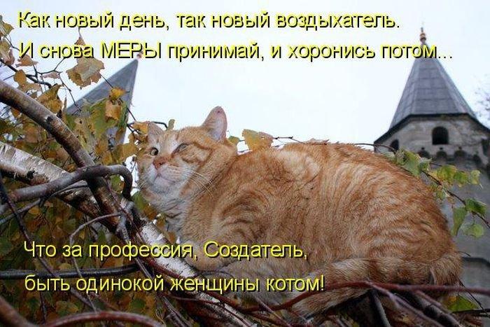 Прикольные картинки с кошками и надписями ржачные для поднятия настроения