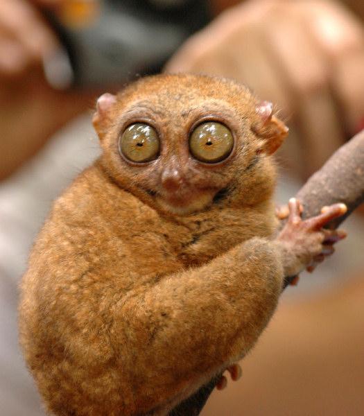Юмор: Уморительные животные,которые в шоке от происходящего (20 фото)