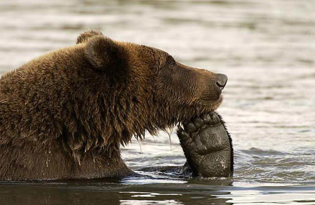 Открытки, картинка смешные медведи