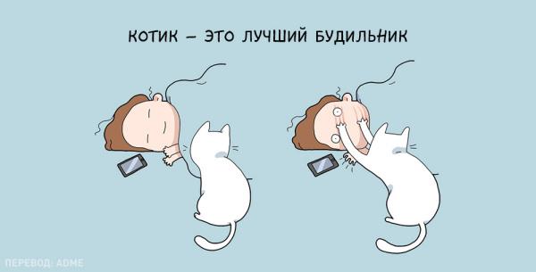 Юмор: Преимущества жизни с котом:)