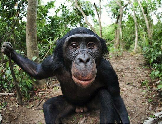 Смешные обезьянки (25 фото)