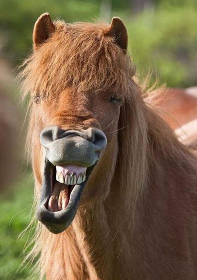 Картинка про лошадь прикол, спасибо подарок