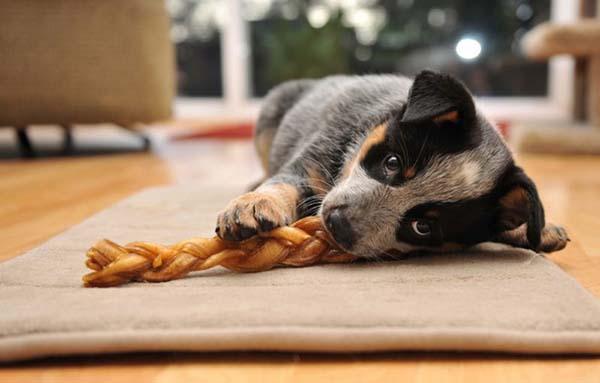 Юмор: Животные, которые не могут смириться с тем, что на них не обращают внимания (15 фото)