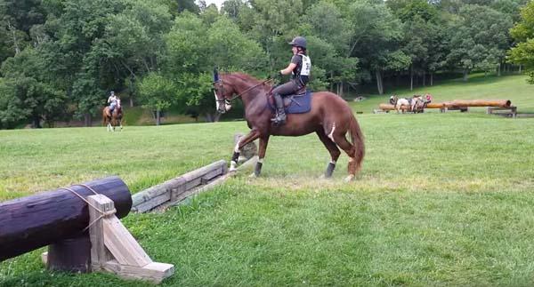 Юмор: То,что сделала эта лошадь,насмешило меня до слёз!