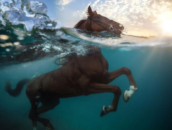 Позитивная подборка плавающих животных (17 фото)