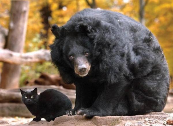 Это интересно: Происхождение названия животных (11 фото)