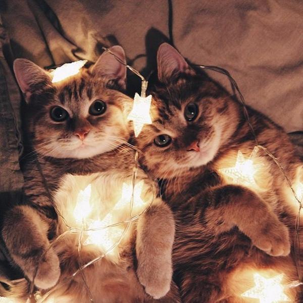 Позитив: Эти два рыжих котёнка, найденных в парке, неразлучны с первого дня (8 фото)