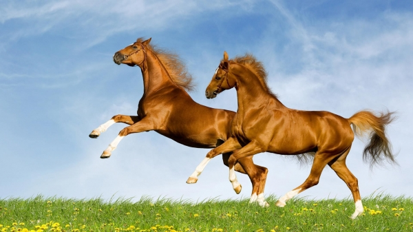 Прикольные лошадки (30 фото)