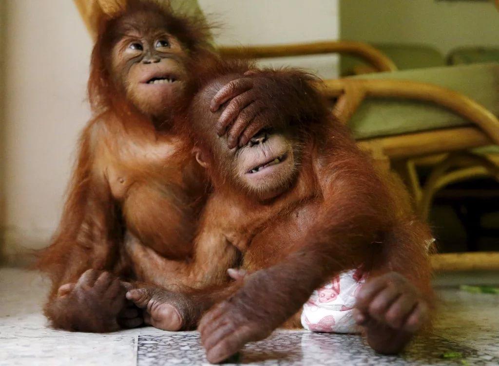 посмотреть смешные картинки про животных пожалуйста как правильно