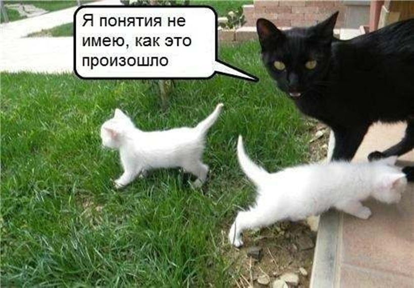 Приколы про кошек до слез картинки