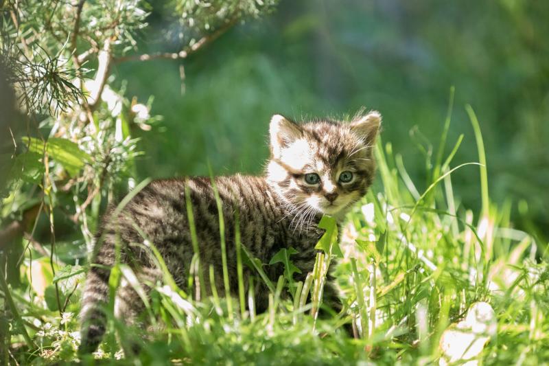 сексвайф котята дикой степной кошки фото ожидала, что