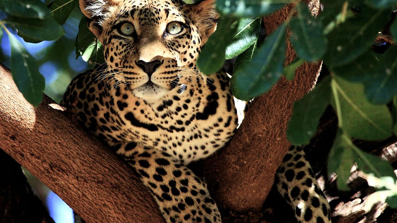 Самые красивые картинки животного мира
