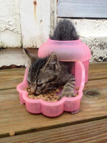 Юмор: Коты против логики (14 фото)
