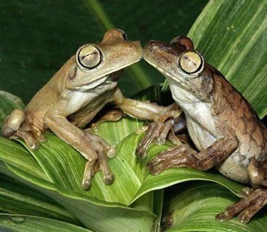 картинки поцеловала жабу персональные звания