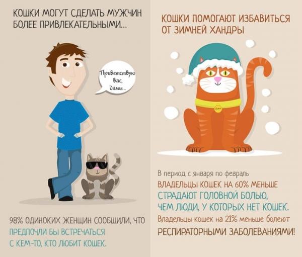 Забавные  факты о кошках ( 8 фото)