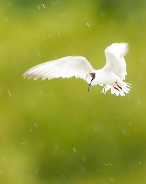 Птицы под дождём (25 фото)