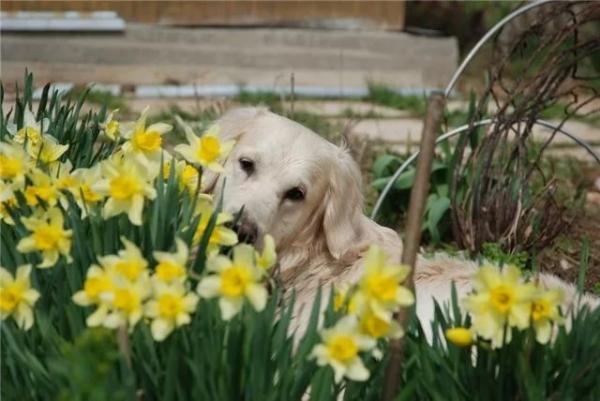 Собаки на даче (55 фото)