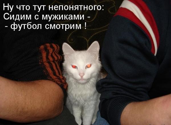 Усатые болельщики:) (15 фото)
