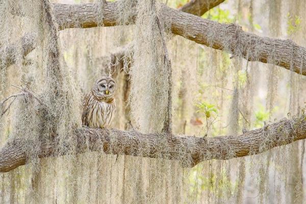 Птичий конкурс Audubon Photography Awards 2018 (19 фото)