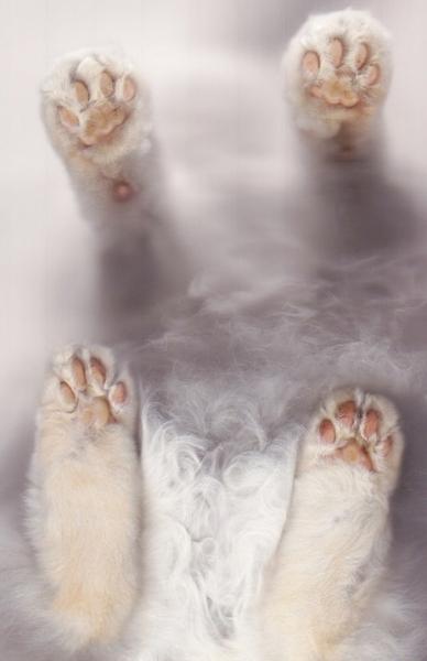 Лапки усатых-полосатых (20 фото)