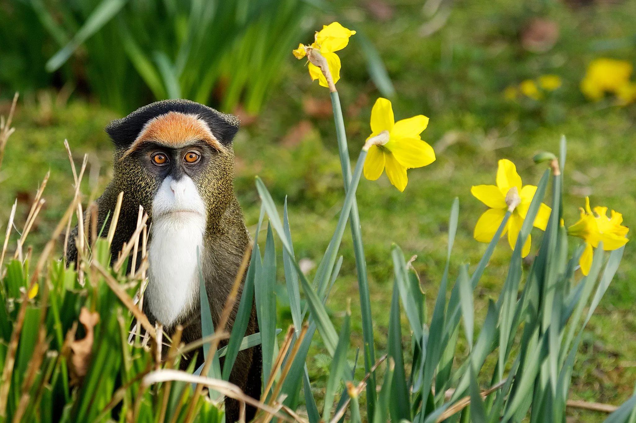 красивые позитивные картинки про весну цвета