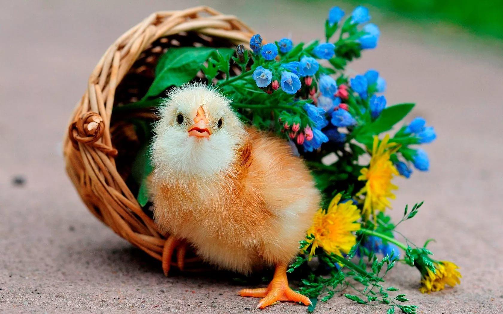 Красивые животные картинки смешные