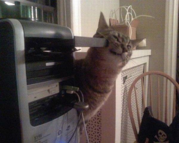 Ох уж эти кошки:) (30 фото)