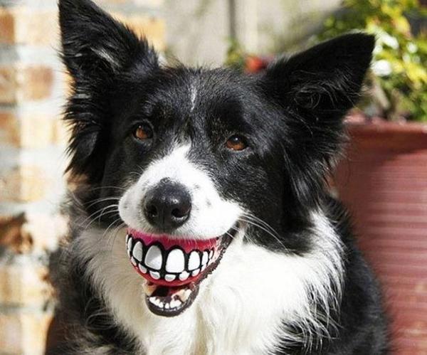 Юмор: Мимишные собаки,которые забавно выглядят со своими игрушками (9 фото)