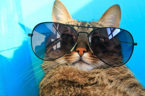 Милые котейки (30 фото)