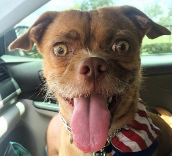 Супер-пёс,который  покорил мир (16 фото)