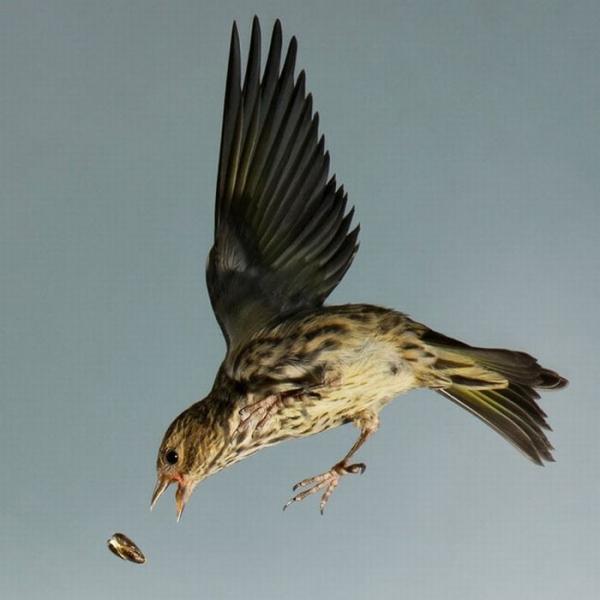 Птицы в полёте (20 фото)