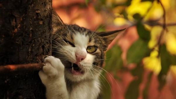 Ох уж эти кошки:) (25 фото)