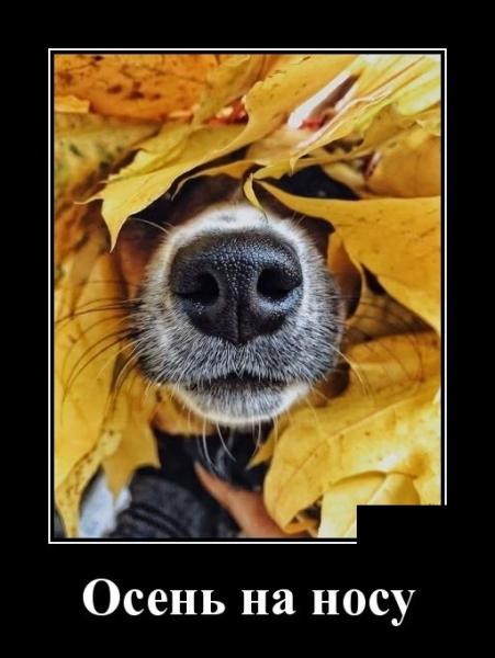 Осень на носу (20 фото)