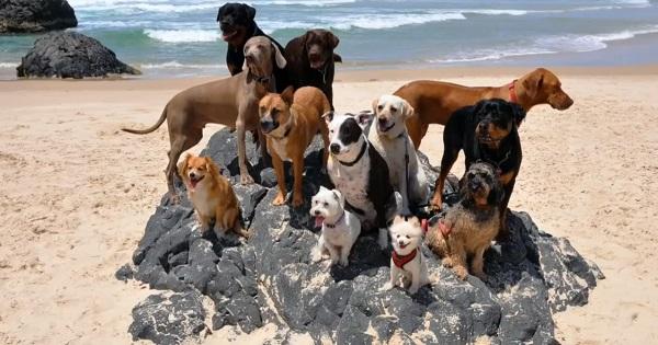Юмор: 12 собак и один кот на пляже