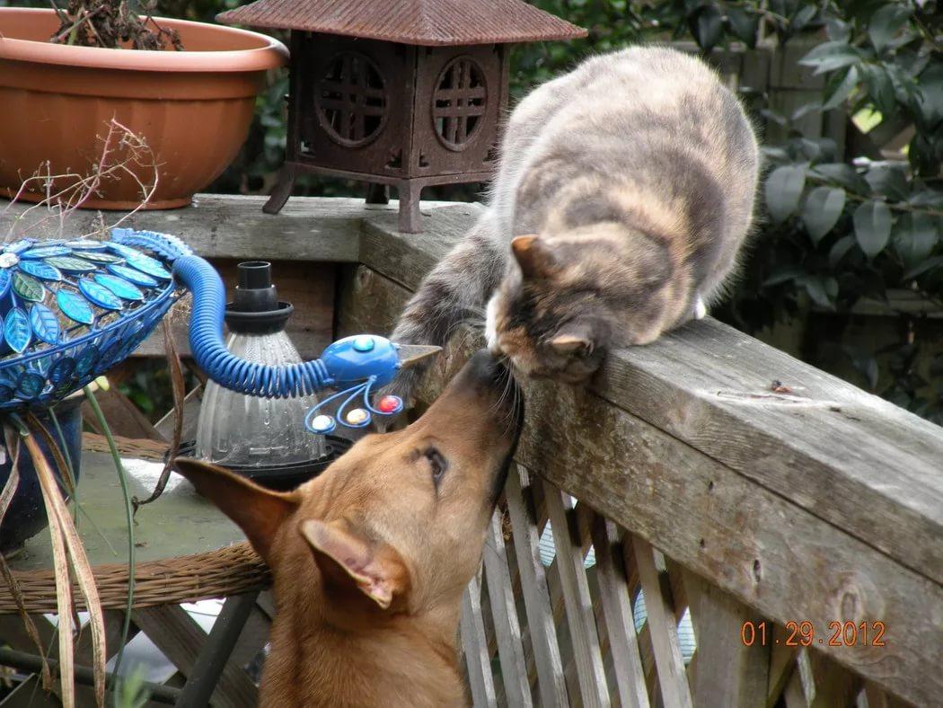Картинки с животными с приколом и так