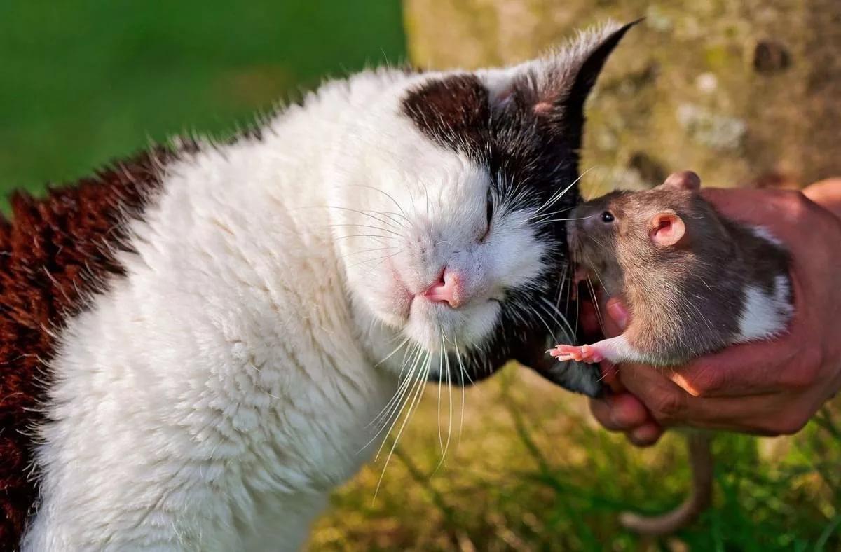 Закачать смешные картинки с животными