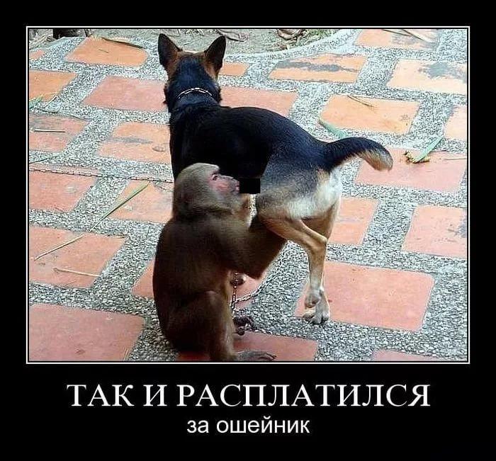 Самые смешные демотиваторы про животных