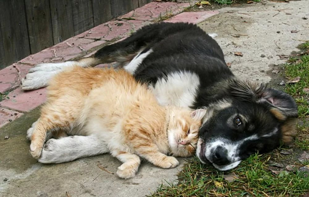 Картинки и фото кошек и собак с надписями, пожеланиями доброго