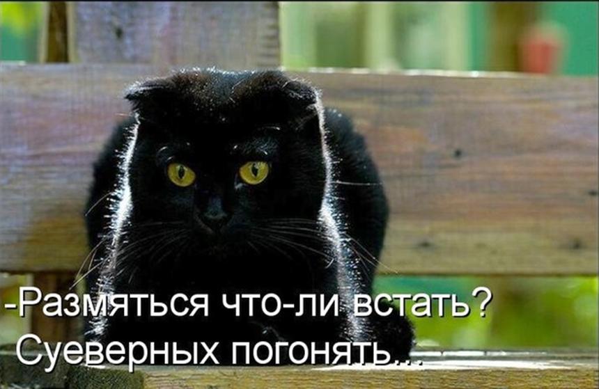 Черная кошка прикольные картинки с надписями