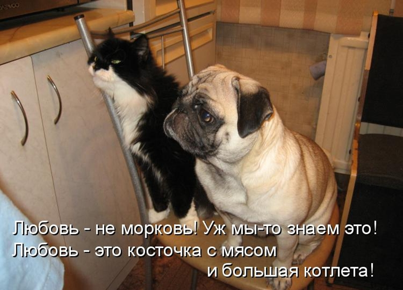 Картинки коты и собаки с прикольной надписью