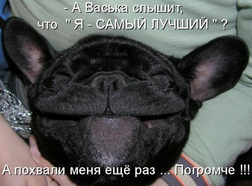 Фото собак с надписями смешные до слез, картинки днем