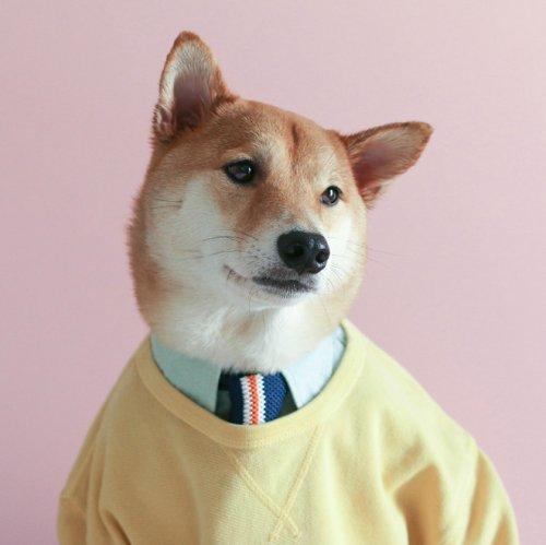 Собака-модель (19 фото)